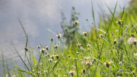 unfold: The small flower daylight
