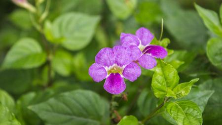 unfold: The blue on Flower