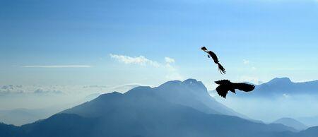 Flying jackdaws Stock Photo