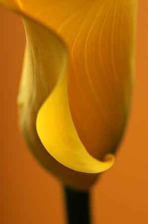 Studio photo of flower photographed with light brush                             Stock Photo