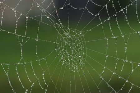 Dew on spiders web