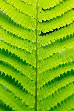 Detail of green grass