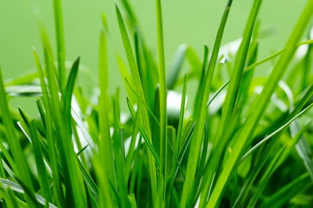 A close up of fresh green grass