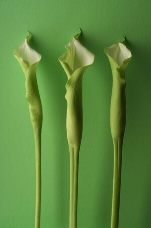 Three green lillies on green canvas