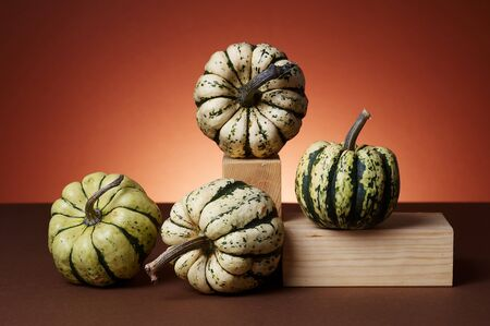 Studio shot of pumpkins Stock Photo - 4047971