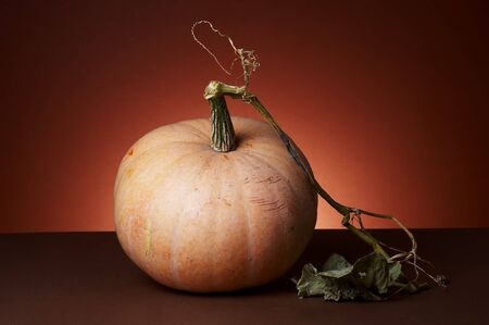 Studio shot of pumpkins Stock Photo