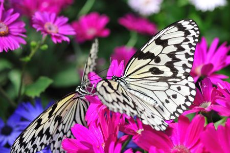 Paradise of Butterfly Stock Photo - 6779909