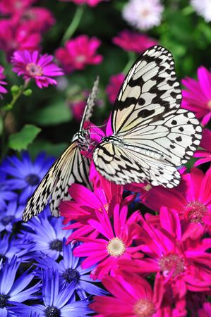Paradise of butterfly Standard-Bild