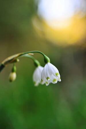 Snowflake flower Stock Photo - 9774193