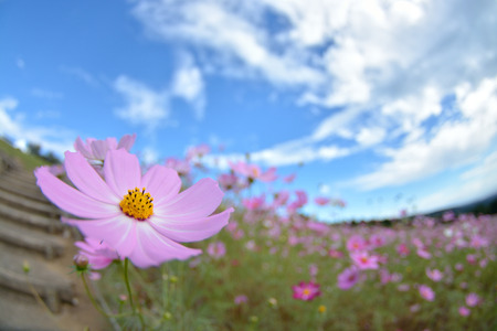 white clouds: Cosmos Stock Photo