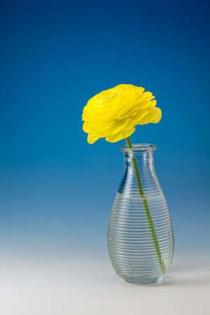 Ranunculus asiatics Stock Photo