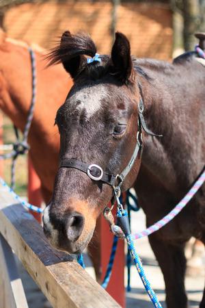馬の肖像画 写真素材 - 44112952