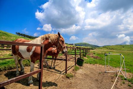 馬の肖像画 写真素材 - 46337993