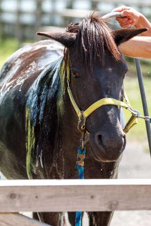 Horse Portrait Standard-Bild