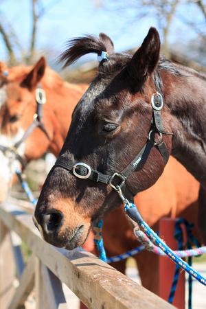 馬の肖像画 写真素材 - 46281120