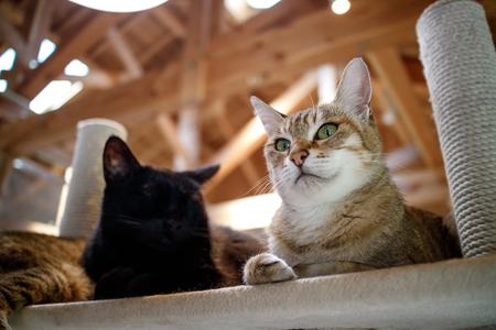 Cat portrait Standard-Bild