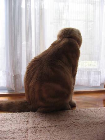 Cat's Back Shot 免版税图像