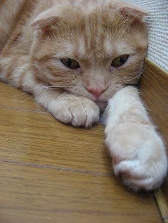 Cat extending his arm 免版税图像