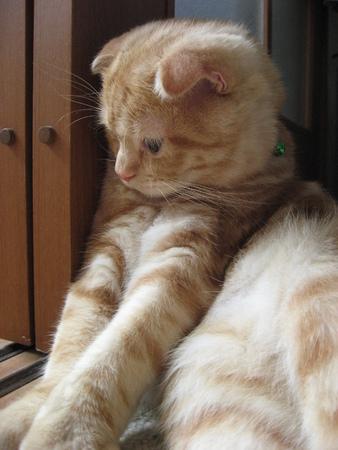 Sitting Cat 免版税图像