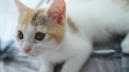 Kitten7s Face