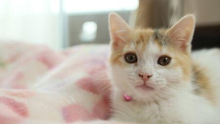 Kitten's face