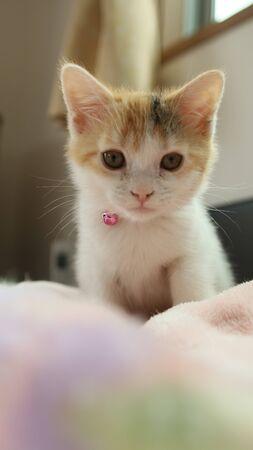 Sweet Kitten 免版税图像