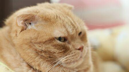 Big Cat 免版税图像