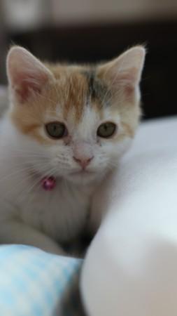 Kitten 免版税图像 - 81240980