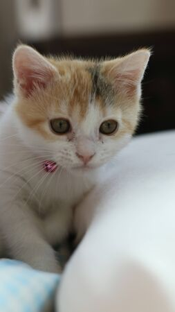 Kitten looking to somthing