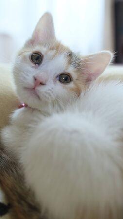 Cute Kitten 免版税图像 - 81210192