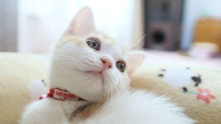 Sute Kitten Face