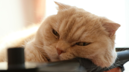 Sleepy Cat 免版税图像