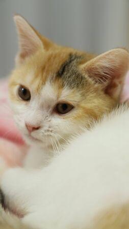 Cute Kitten 免版税图像 - 86194544
