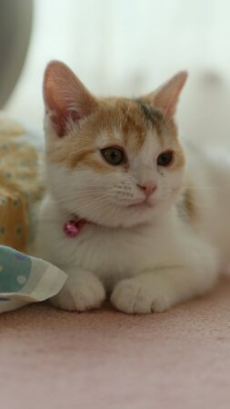 Cute kitten 免版税图像 - 86194548