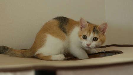 Cute kitten 免版税图像