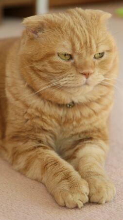Big Cat 免版税图像 - 88760659