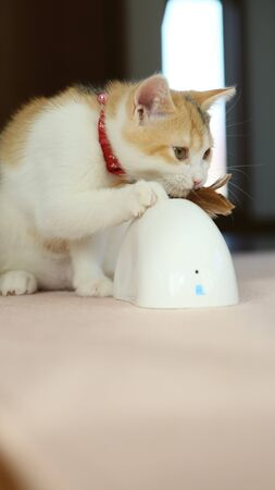 Kitten enjoy with toy
