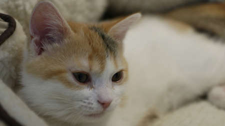 Lokking Kitten 免版税图像