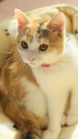 Standing Cute Kitten