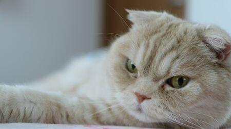 Cat is Looking 免版税图像