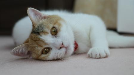 Kitten is Lying 免版税图像 - 101553847