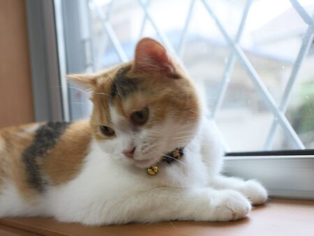 Cute cat beside window