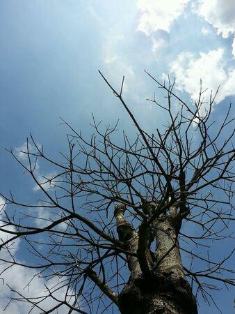tree dead: Albero morto