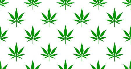 Green leaves of marijuana