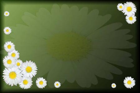 felicitation: daisy wish on green background  Stock Photo