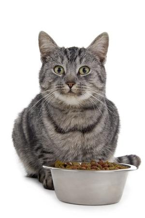 고양이 그릇에서 먹는다. 흰색 배경에 고립.