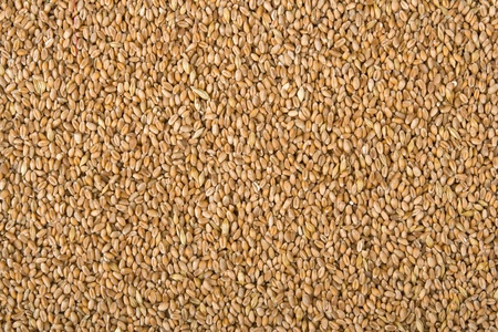 agronomic: Background,fabric from cereal grains.