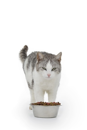 Cat with saucer granule on white background. photo