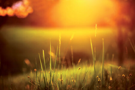 Grassy meadow during summer sunset