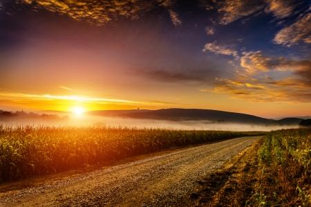 トウモロコシ畑の近く遅く夏霧の朝